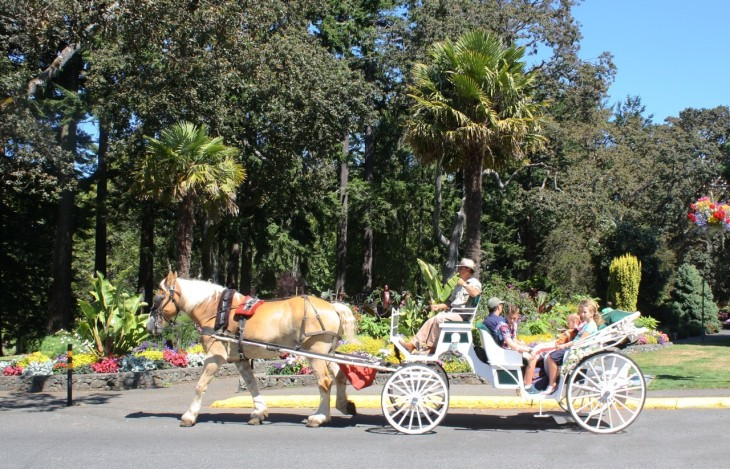 Horse-drawn carriage in Beacon Hill Park.